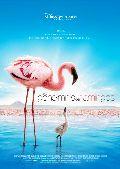 Geheimnis der Flamingos, Das