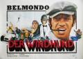 Windhund, Der